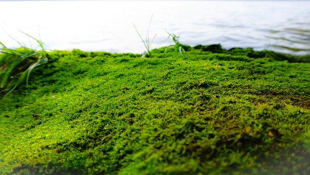 Moss, Lake, Nature, Water, River, Landscape, Tree