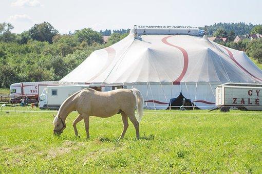 Circus, The Horse, Circus Tent, Machine Circus, Grass