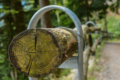 Log, Tribe, Wood, Tree, Forest, Nature, Annual Rings