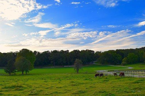 Rural, Pasture, Green, Grass, Cows, Sunset, Clouds
