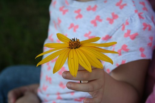 Child, Flower, Gift, Child's Hand, Pick Flowers