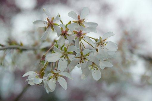 Flowers, White, Spring, White Flower, Nature