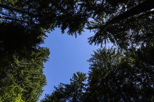 Grindelwald, Trees, Switzerland, Conifers, Firs, Sky
