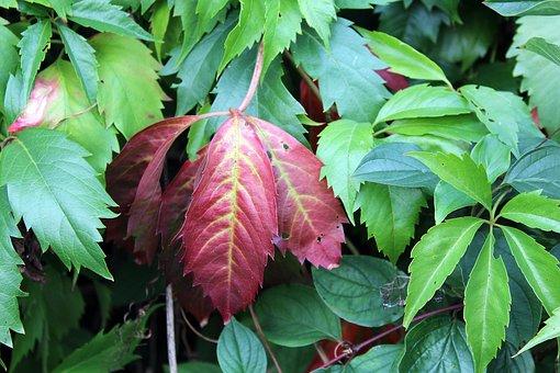 Foliage, Colors, Nature, Autumn Foliage