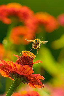 Bee, Flower, Nature, Garden, Insect, Natural, Nectar