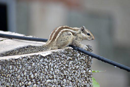 Squirrel, On The Edge, Rodent, Cute, Stripes, Animal