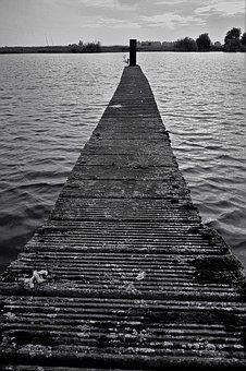 Web, Water, Wood, Decay, Black And White, Lake, Nature