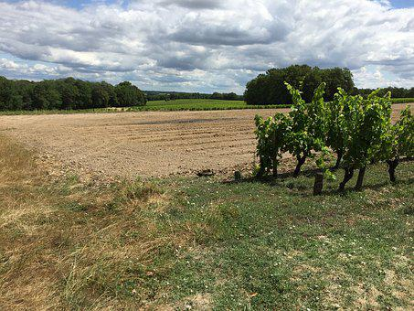 France, Winefields, Outside, Gardening, Clouds