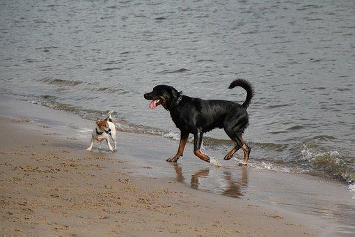 Dogs, Elbe Beach, Traces, Elbe, Walk On The Beach