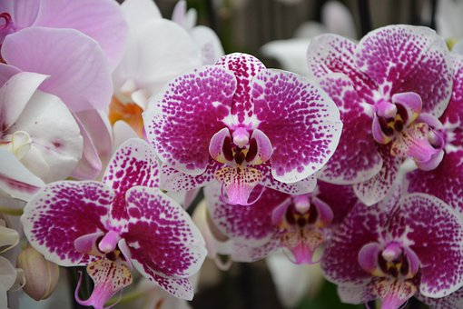 Flowers, Orchid, Flowering, Exotic, Flowers Orchid