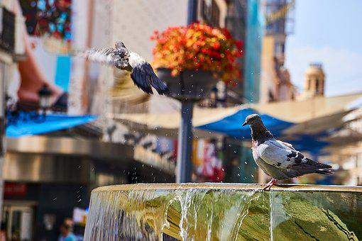 Spain, Madrid, Fountain, Pigeons