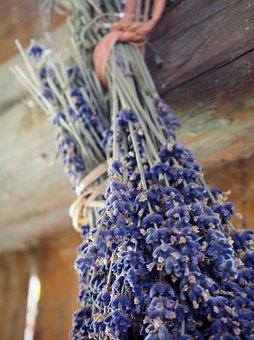 Lavender, Herb, Dry, Dried, Herbs, Nature