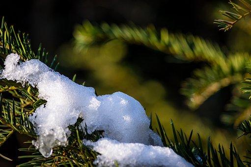 Snow, Ice, White, Melt, Melting, Christmas, Seasonal