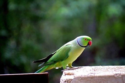 Bird, Parrot, Nature, Natural, Animal, Tropical