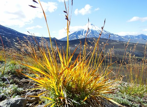 Autumn, Grass, Seeds, Nature, Plant, Volcanoes