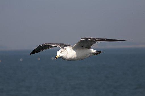 Seagull, Sea Birds, New, Birds, The Gull On The Sea