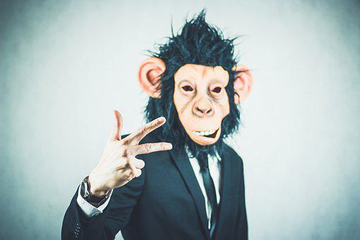 Monkey, Application, Training, Business, Portrait
