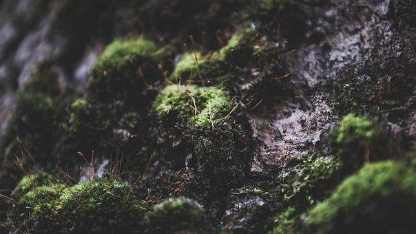 Background Image, Moss, Tree, Micro
