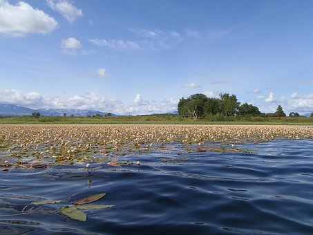Lake, Autumn, Weed, Bloom, Sky, Clouds, Reflection