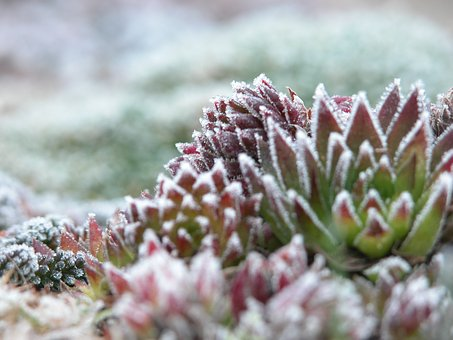 Frost, Plant, Cold, Nature, Hoarfrost, Ice, Frozen