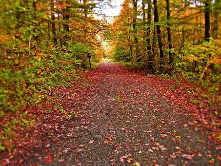 Forest, Autumn, Lane, Foliage, Nature, Landscape