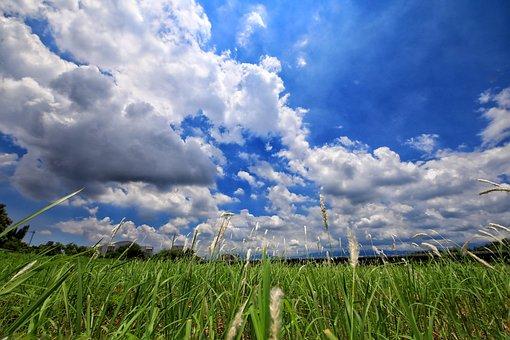 A Surname, Prairie, Nature, Sunshine, Grass