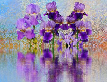 Iris, Flower, Schwertliliengewaechs, Dark Purple