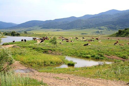 Meadow, Mountains, Landscape, Hills, Pasture, Herd, Cow