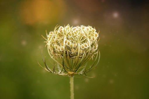 Flower, Bloom, Summer, Wild Flower, Plant, Nature