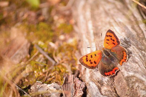 Butterfly, Wood, Close, Insect, Nature, Animal World