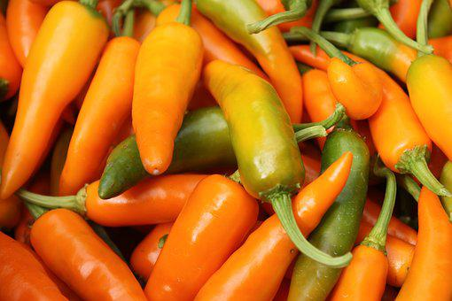 Chilli, Yellow, Savory, Farm, Farmland