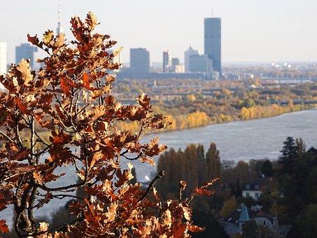 Vienna, Danube, Millenium Tower, Autumn, Leaves
