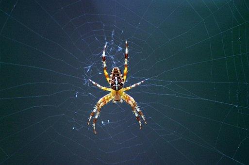 This Paucarcancha With A Whiff Of, Araneus, Cobweb