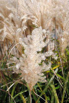 Cereals, Nature, Field, Plant, Ear