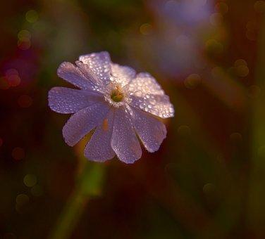 Flower, Rosa, Forest Flowers, Summer, Beautiful, Nature
