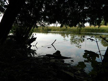 Nature, Idyll, Idyllic, Lake, Landscape, Water, Pond