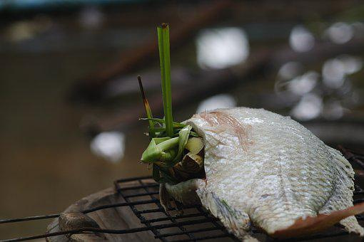 Tilapia, Grilled Fish, Food, Lifestyle, Nature, Life