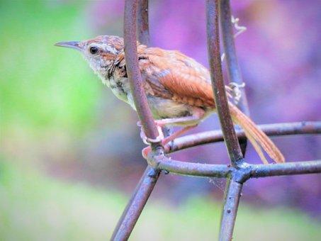Bird, Tiny, Close Up, Metal Cage, Wildlife