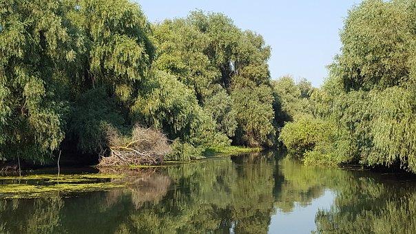 Delta, Romania, Danube, Nature, Vegetation, Natural