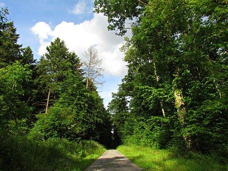 Forest, Way, Lane, Tree, Landscape, Green, Foliage
