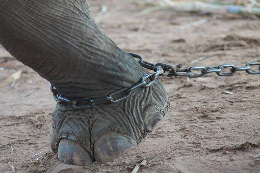 Elephant, Nature, The Environment, Animals, Thailand