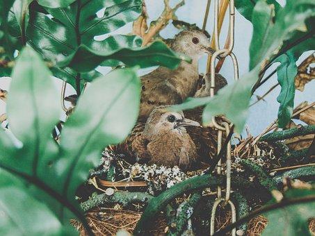 Birds, Ruddy Ground Dove, Nest, Bird, Freedom, Dove