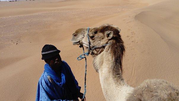 Camel, Bedouin, Morocco, Desert, Dry, Trail, Scenery