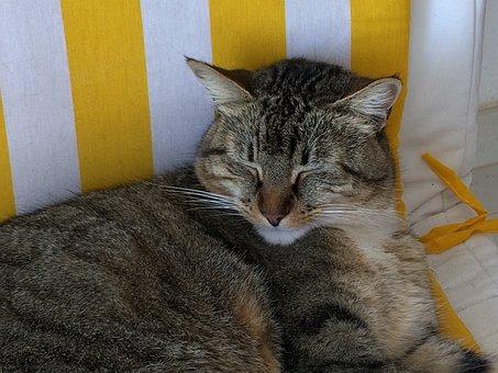 Cat, Tabby, Sleepy, Dozy, Cute, Pet, Animal, Feline