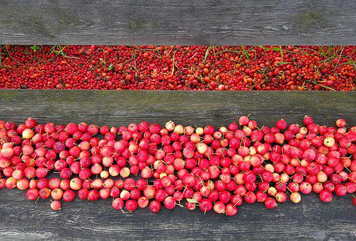 Rosehip, Red, Rose Hip, Colors, Bench, Summer