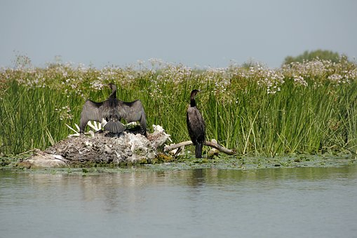 Wild, Nature, Wildlife, Danube Delta, Water, Exotic
