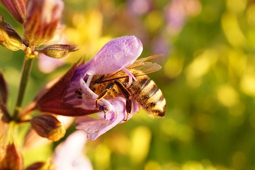 Bee, Blossom, Bloom, Macro, Flower, Collect Nectar