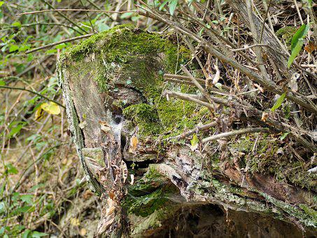 Moss, Wood, Forest, Log, Nature, Weave, Weathered