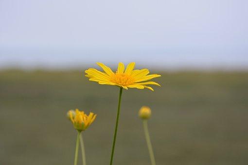 Flowers, Flower, Yellow Daisies, Garden, Flowering