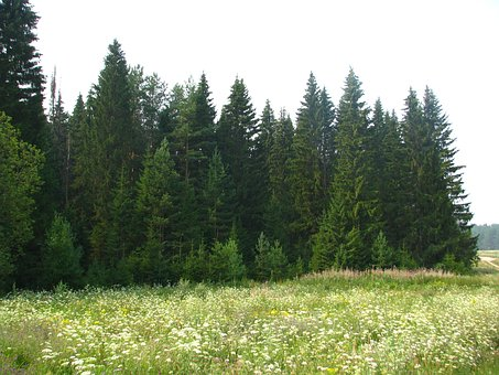 Field, Meadow, Grass, Forest, Summer, Nature, Russia